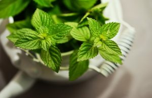 can i eat mint leaves in pregnancy