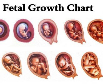 fetal growth chart